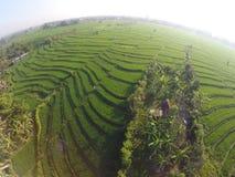 Terrazzo del giacimento del riso fotografia stock