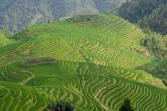 Terrazzo del giacimento del riso di Guilin Immagini Stock Libere da Diritti