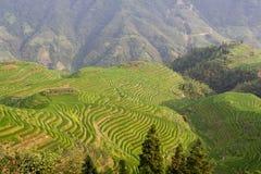 Terrazzo del giacimento del riso di Guilin Immagine Stock