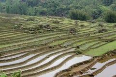 Terrazzo del giacimento del riso, valle di PA del Sa, Vietnam Immagine Stock Libera da Diritti
