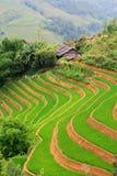 Terrazzo del riso Fotografie Stock