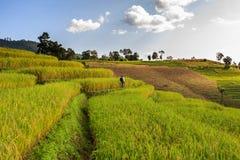 Terrazzo del riso Fotografie Stock Libere da Diritti
