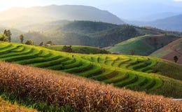 Terrazzo del riso Immagine Stock Libera da Diritti