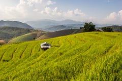 Terrazzo del riso Immagini Stock Libere da Diritti