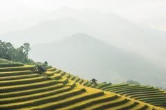 Terrazzo del riso Immagini Stock