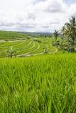 Terrazzo del riso in Bali Immagini Stock Libere da Diritti