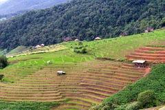 Terrazzo del riso a Chiang Mai fotografia stock libera da diritti