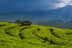 Terrazzo del riso a Chiang Mai immagini stock