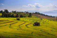 Terrazzo del riso in chingmai Fotografie Stock Libere da Diritti