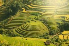 Terrazzo del riso del paesaggio del VIETNAM sulla montagna del cang chai della MU V Fotografie Stock