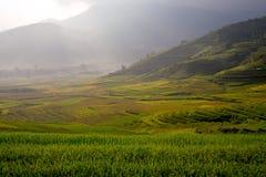 Terrazzo del riso del paesaggio del Vietnam sulla montagna nel Tu Le City Fotografie Stock Libere da Diritti