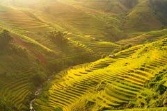 Terrazzo del riso di agricoltura sulla montagna bella Fotografia Stock