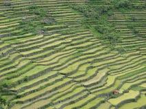 Terrazzo del riso di Batad in Banaue, Ifugao, Filippine fotografia stock