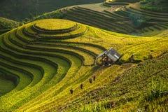 Terrazzo del riso di Cang Chải del ¹ di MÃ, Vietnam fotografie stock