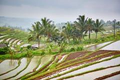 Terrazzo del riso di Jatiluwih un giorno piovoso Immagine Stock