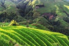 Terrazzo del riso di Longi Fotografia Stock