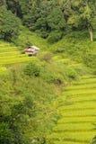 Terrazzo del riso di Mae Klang Luang con il piccolo riparo Fotografia Stock Libera da Diritti