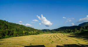 terrazzo del riso dopo il raccolto al nordico della Tailandia Fotografie Stock