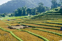 terrazzo del riso dopo il raccolto al nordico della Tailandia Fotografia Stock