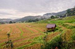 terrazzo del riso dopo il raccolto al nordico della Tailandia Immagini Stock