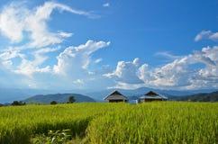 Terrazzo del riso e della capanna Immagine Stock