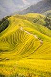 Terrazzo del riso in Longshen Guilin Cina fotografia stock libera da diritti