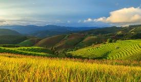 Terrazzo del riso nel tempo di tramonto Immagini Stock Libere da Diritti