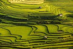 Terrazzo del riso nel Vietnam Fotografie Stock