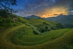 Terrazzo del riso nel Vietnam Fotografia Stock