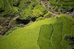 Terrazzo del riso nel Vietnam Immagini Stock Libere da Diritti