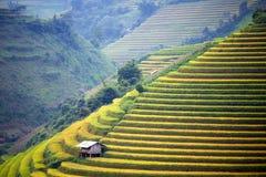 Terrazzo del riso nel Vietnam Immagini Stock