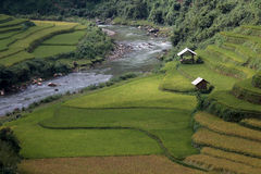 Terrazzo del riso nel Vietnam Fotografia Stock Libera da Diritti