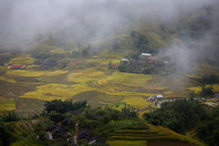 Terrazzo del riso nel Vietnam Immagine Stock Libera da Diritti