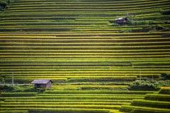 Terrazzo del riso nel Vietnam Immagine Stock