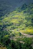 Terrazzo del riso nella valle Fotografia Stock
