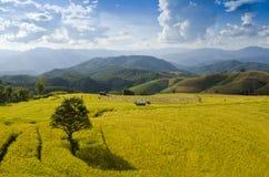 Terrazzo del riso nordico della Tailandia Immagini Stock Libere da Diritti