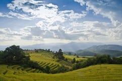 Terrazzo del riso nordico della Tailandia Immagine Stock Libera da Diritti