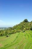 Terrazzo del riso su Bali Fotografia Stock