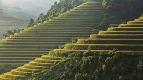 Terrazzo del riso sul moutain nel Vietnam Fotografia Stock