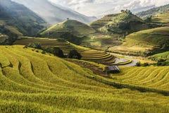 Terrazzo del riso sul moutain nel Vietnam Immagini Stock