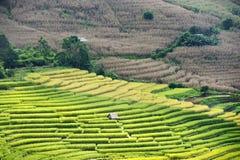 Terrazzo del riso sulla montagna Immagini Stock Libere da Diritti