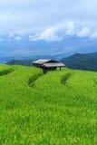 Terrazzo del riso, Tailandia Immagine Stock