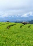 Terrazzo del riso, Tailandia Fotografie Stock