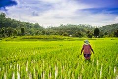 Terrazzo del riso in Thialand Fotografie Stock