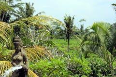 Terrazzo del riso a Ubud fotografia stock libera da diritti