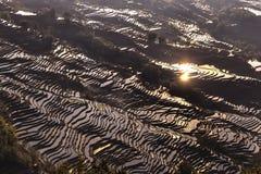 Terrazzo del riso in Yuanyang, il Yunnan, Cina Fotografia Stock Libera da Diritti