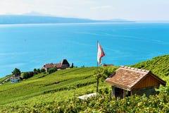Terrazzo della vigna di Lavaux che fa un'escursione itinerario della Svizzera Immagine Stock Libera da Diritti