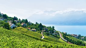Terrazzo della vigna di Lavaux della Svizzera Fotografie Stock