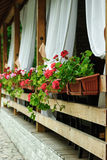 Terrazzo di estate con le tonalità ed i gerani Immagini Stock Libere da Diritti