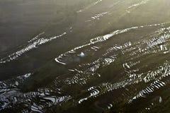 Terrazzo di Hani, Yunnan, China014 Fotografia Stock Libera da Diritti